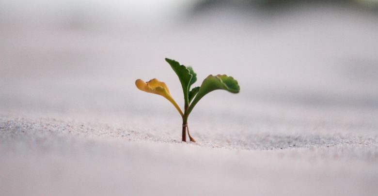 Photo of Lessons Learned – Startup #Growth